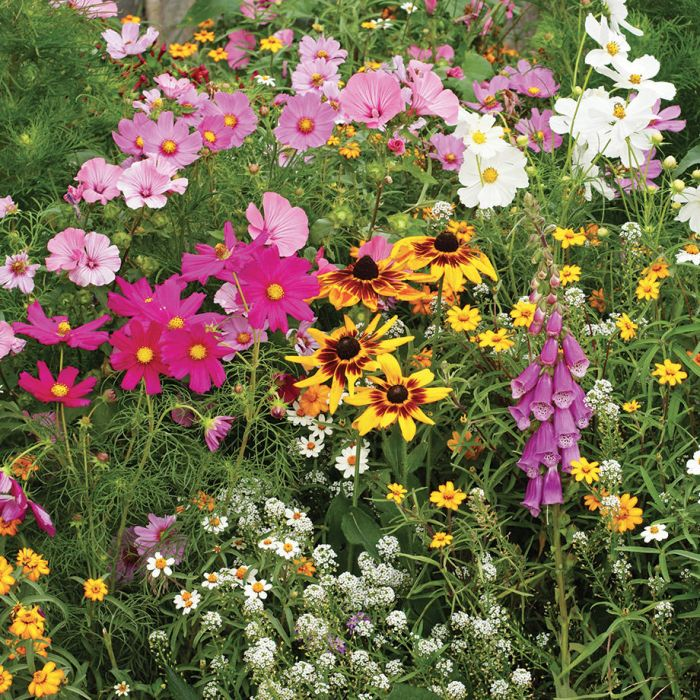 cottage garden mix wildflowers 3 - Wildflower Garden