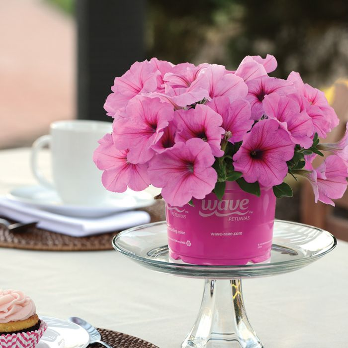 Easy wave pink passion petunia flower seeds veseys easy wave pink passion petunia 0 mightylinksfo