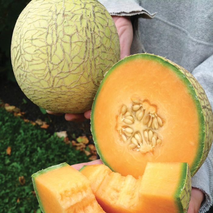 Pixie Melon Vegetables Veseys Cantaloupe is the perfect healthy summertime treat. pixie melon