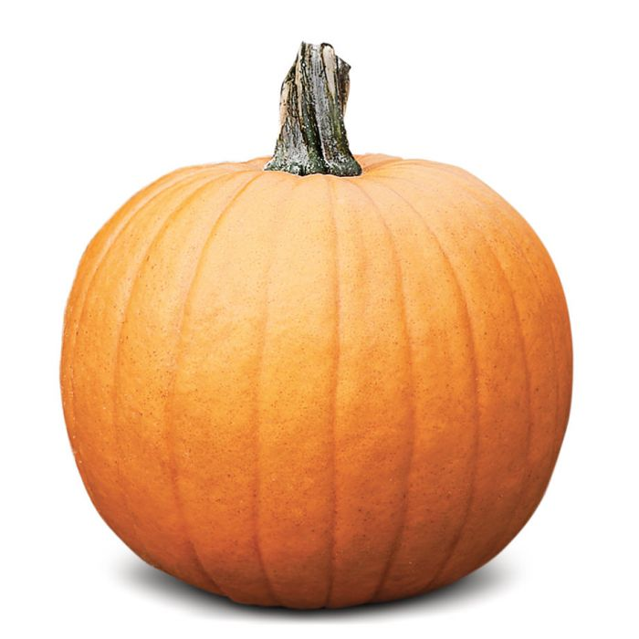 racer plus pmr pumpkin vegetables veseys
