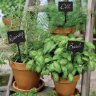 Black Plant Stakes
