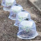 Garden Cloches Medium