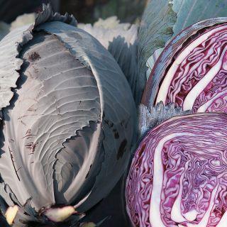 Klimaro Cabbage Thumbnail