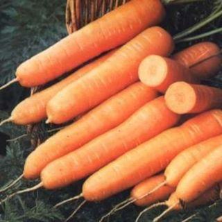 Touchon Carrot Thumbnail