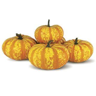 Blaze Pumpkin Thumbnail