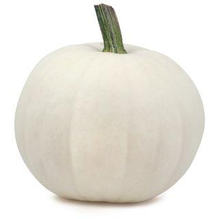 Blanco Pumpkin Thumbnail