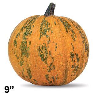 Pepitas Pumpkin Thumbnail