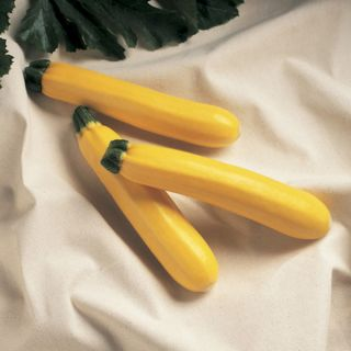 Golden Delight Summer Squash Thumbnail