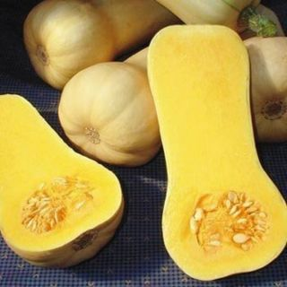 Early Butternut Winter Squash Thumbnail