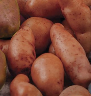 French Fingerlings Potatoes Thumbnail