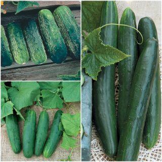 Cucumbers - Vegetables   Veseys