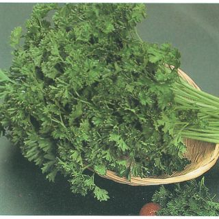 Italian Dark Green Parsley Thumbnail