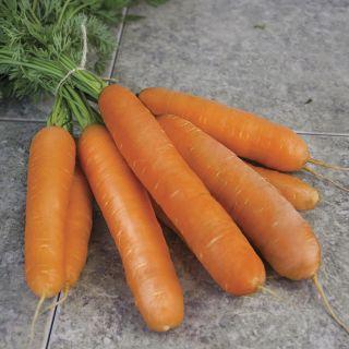 Miami Organic Carrot Thumbnail