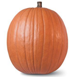 Howden Pumpkin Thumbnail