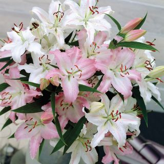 Wedding Bells Fragrant Lilies Mix Thumbnail