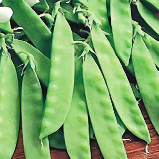 Oregon Giant Peas Thumbnail