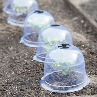 Garden Cloches Medium (Set of 6) Thumbnail