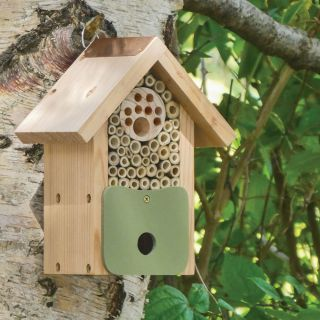 Bug & Bee Biome Thumbnail