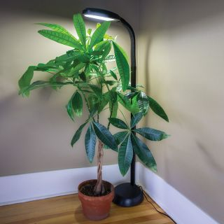 Agrobrite Standing Plant Stand Thumbnail