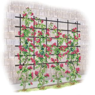 Titan Customizable Wall Trellis Thumbnail