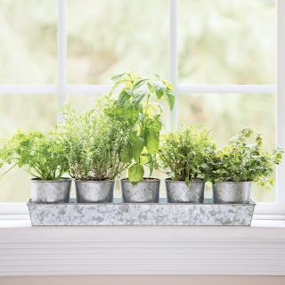 Galvanized Herb Planters and Tray Thumbnail