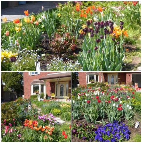 Ben's Garden from Brantford, ON