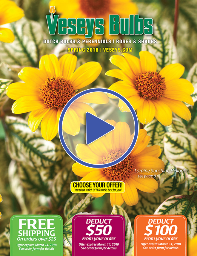 2018 Veseys Spring Bulb Digital catalogue