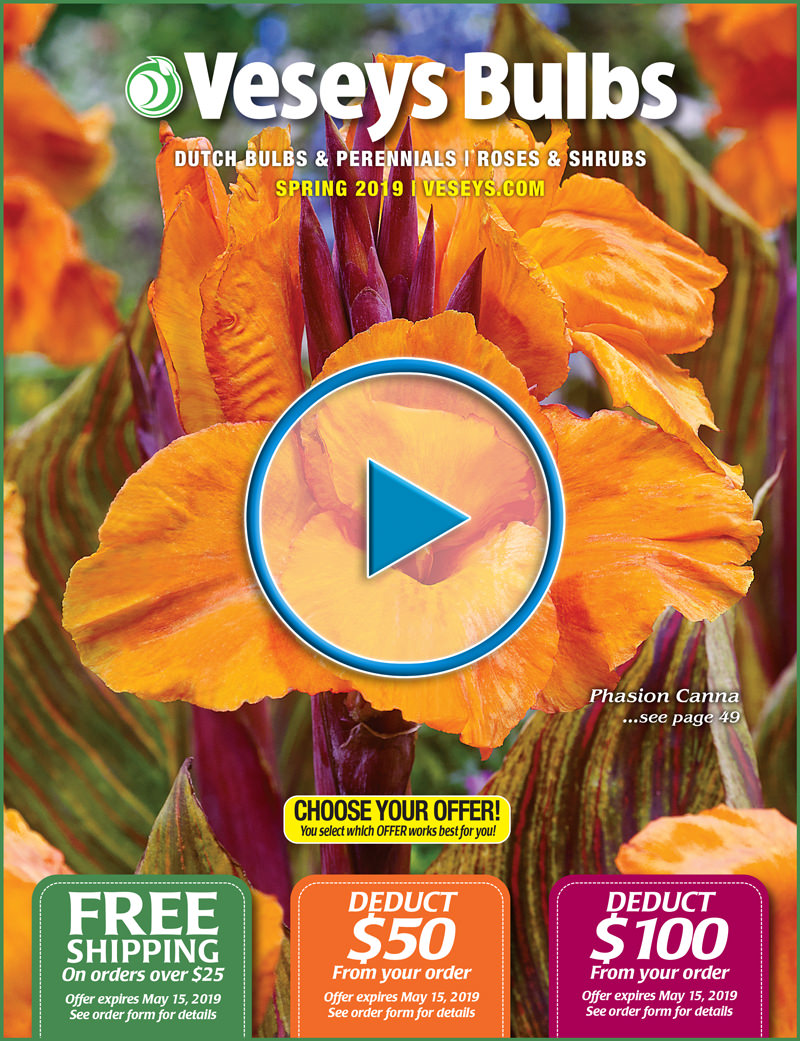 2019 Veseys Spring Bulb Digital Catalogue