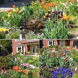 Benu0027s Garden From Brantford, ON