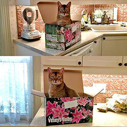 Cat sitting on a Veseys Seed box on a countertop